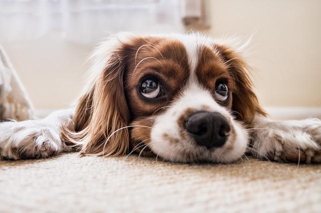 zadośćuczynienie po śmierci psa