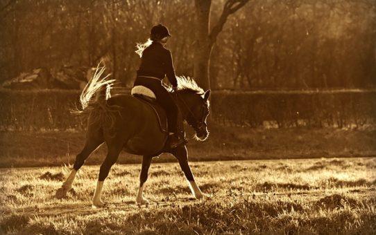 odszkodowanie za upadek z konia