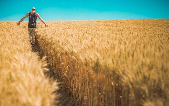 Odszkodowanie z KRUS za wypadek w rolnictwie